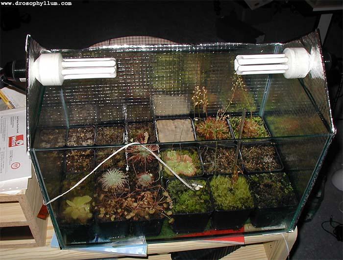Aquarium Als Terrarium Verwenden : Terrariumkultur von fleischfressenden pflanzen